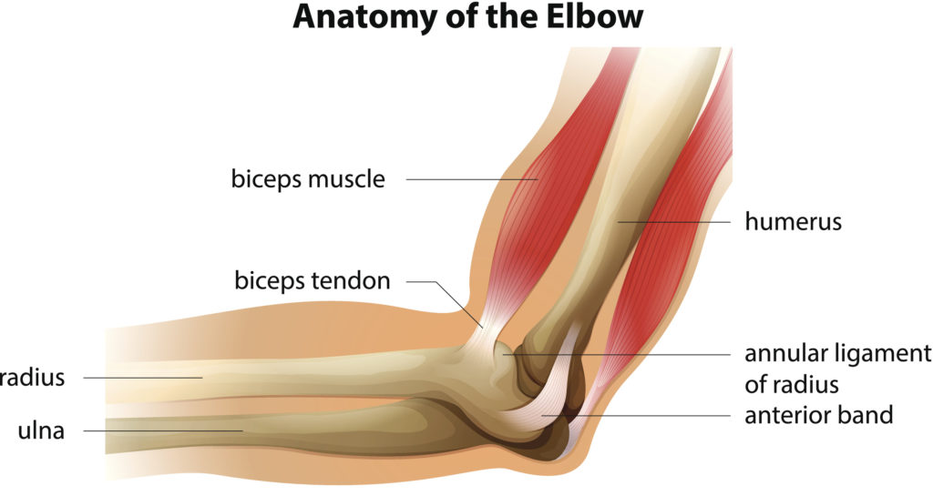 Biceps Tendon Tears with Dr. Richard Cunningham, Orthopedic Surgeon